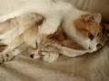 Gato: Uma lavagem completa à raposa