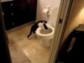 Cat anda Toilet / Gato Limpinho