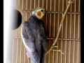 Lopes a investigar o ninho