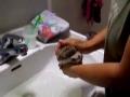 Ouriço no Banho