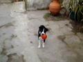 Luna com a bola
