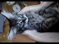Ulyses un gatito muy especial!