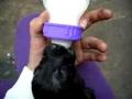 Cachorro a beber biberão